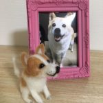 ダイソーの羊毛フェルトで天国の愛犬を作ってみました。作り方を写真でご紹介します。